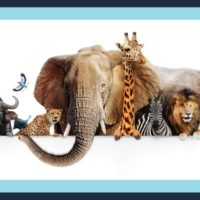 Multiple animals to introduce our blog about animal teeth fun facts