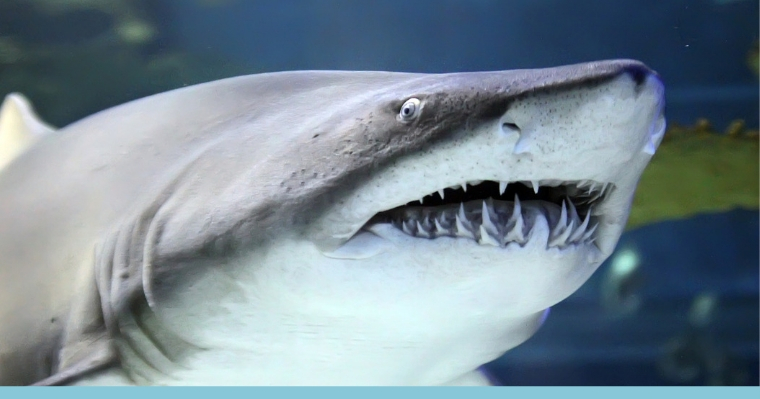 10 Fun Facts About Animal Teeth You Can't Miss (Especially #8)